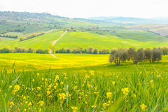 Landscape of tuscan countryside Stock Image