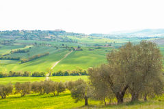 Landscape of tuscan countryside Stock Photography