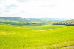 Landscape of tuscan countryside Royalty Free Stock Photos