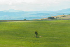 Landscape of tuscan countryside Royalty Free Stock Photo