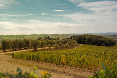 Landscape of the Tuscan royalty free stock photos