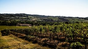 Landscape of the Tuscan vineyards, Chianti region, Italy. Nature and agriculture concept. Vacations in Italy. Copy space royalty free stock images