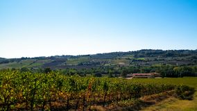 Landscape of the Tuscan vineyards, Chianti region, Italy. Nature and agriculture concept. Vacations in Italy. Copy space royalty free stock photo