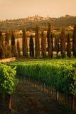 Landscape in Tuscany Stock Image