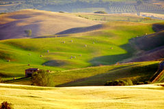 Landscape in Tuscany. At sunset in summer Royalty Free Stock Photography