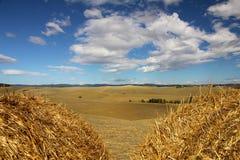 Landscape of Tuscany. Near Siena (Italy Stock Photos