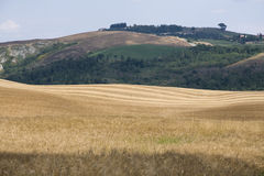 Landscape of Tuscany Royalty Free Stock Images
