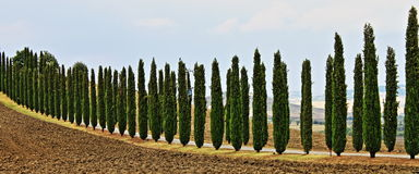 Landscape in Tuscany with cipress Royalty Free Stock Images