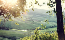 Landscape of Tuscany hills with lens flare Royalty Free Stock Photo