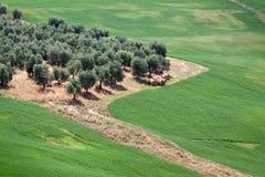Landscape in Tuscany, Italy Stock Image