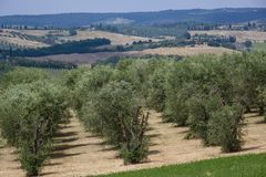 Landscape in Tuscany, Italy Stock Images