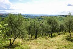 Landscape in Tuscany, Italy Royalty Free Stock Image