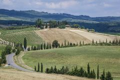 Landscape in Tuscany, Italy. Typical landscape with vineyards in Tuscany, Italy, Europe Royalty Free Stock Image