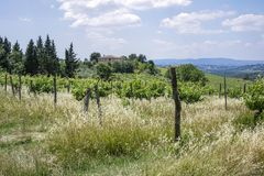 Landscape in Tuscany, Italy. Typical landscape with vineyards in Tuscany, Italy, Europe Stock Photos