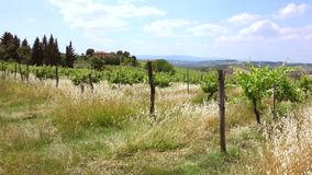 Landscape in Tuscany, Italy. Typical landscape with vineyards in Tuscany, Italy, Europe stock video footage