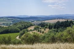 Landscape in Tuscany, Italy. Typical landscape with vineyards and olive trees in Tuscany, Italy, Europe Royalty Free Stock Images