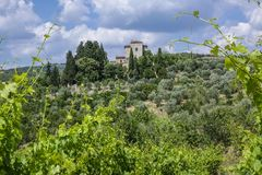 Landscape in Tuscany, Italy. Typical landscape with vineyards and olive trees in Tuscany, Italy, Europe Stock Image