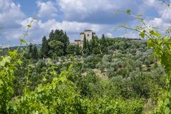 Landscape in Tuscany, Italy. Typical landscape with vineyards and olive trees in Tuscany, Italy, Europe Royalty Free Stock Photos