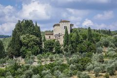 Landscape in Tuscany, Italy. Typical landscape with vineyards and olive trees in Tuscany, Italy, Europe Stock Images