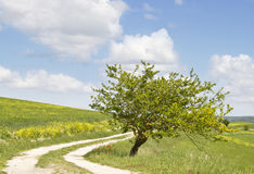 Landscape in Tuscany. Stock Images