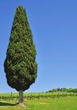 Landscape in Tuscany,San Gimignano,Tuscany Royalty Free Stock Photography
