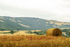 Landscape in Tuscany at summer Stock Photo