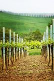 Landscape in Tuscany - vineyard Royalty Free Stock Photos
