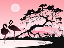 Landscape with two flamingos Royalty Free Stock Image
