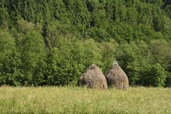 Landscape with haystacks and green grass. Landscape with two haystacks at the edge of the forest and grass in the foreground stock photography