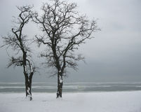 Landscape. Two lonely trees on the shore of the frozen sea Royalty Free Stock Image