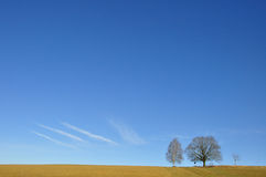 Landscape with two single tree. S in front of clear sky with blue horizon Royalty Free Stock Photography