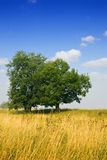 Landscape with two trees Royalty Free Stock Image
