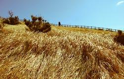 Landscape of Udo island in Jeju Island, South Korea Royalty Free Stock Image
