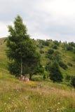 Landscape of Ukraine Stock Photography