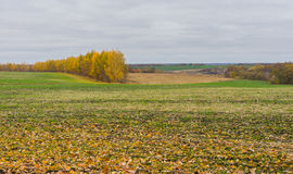 Landscape in Ukrainian fields Stock Photo