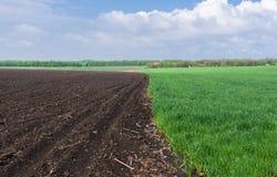 Landscape in Ukrainian fields Stock Images