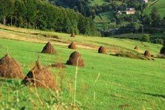 Landscape of Ukrainian green plains Royalty Free Stock Photos