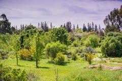 Landscape in Ulistac Natural Area, Santa Clara, south San Francisco bay area, California royalty free stock images