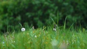 Landscape unites dark-green. Trees and light-green brass stock video footage