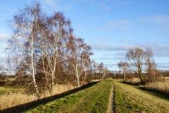 Landscape on Usedom, Germany royalty free stock image