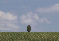 Landscape of val d orcia stock photography