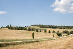 Landscape of val d orcia royalty free stock image