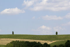 Landscape of val d orcia Stock Images
