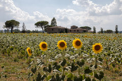 Landscape of val d orcia Stock Image