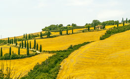 Landscape in Val d'Orcia (Tuscany) Stock Image