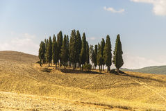 Landscape in Val d'Orcia, Tuscany. The Val d'Orcia, or Valdorcia, a region of Tuscany, central Italy. It is characterised by gentle, carefully cultivated hills stock photography