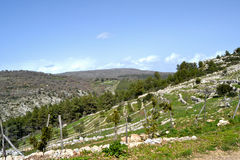 Landscape Sicily Royalty Free Stock Photo
