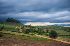 Landscape of vegetable field Stock Photos