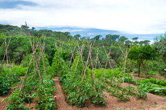 Landscape with vegetable garden Stock Photo