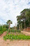 Landscape with vegetable garden Royalty Free Stock Photography
